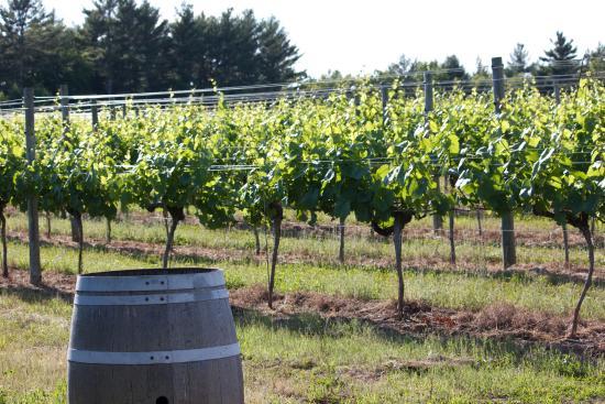 Running Brook Vineyard & Winery
