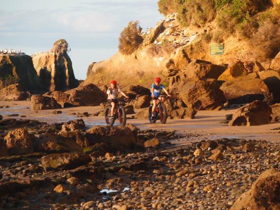 Gannet Bikes