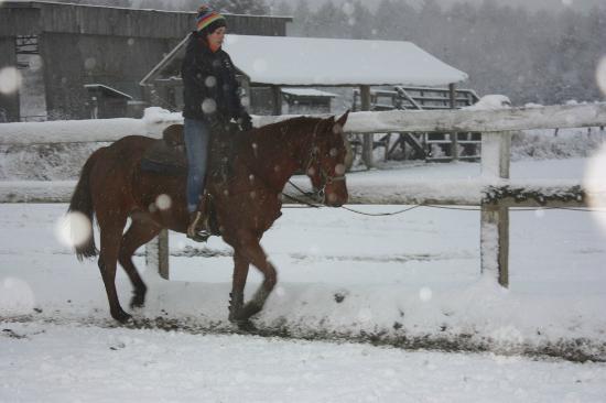Papineauville, Canada: winter horse riding/équitation d'hiver