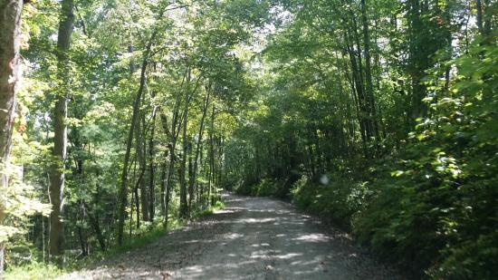 Ducktown, TN: Thunder Rock Forestry Road