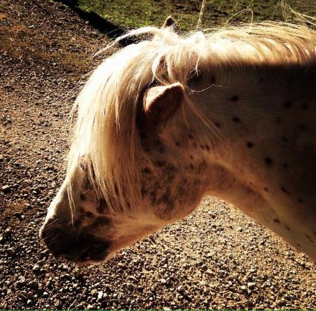 Jonquieres, Francia: Pony libero nel parco