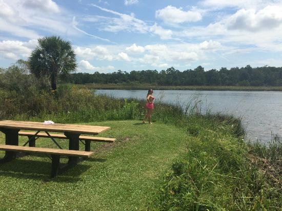 San Marcos de Apalache Historic State Park: El parque estaba cerrado así q en el kiosko hicimos picnic y lanzamos anzuelos para pescar, no o