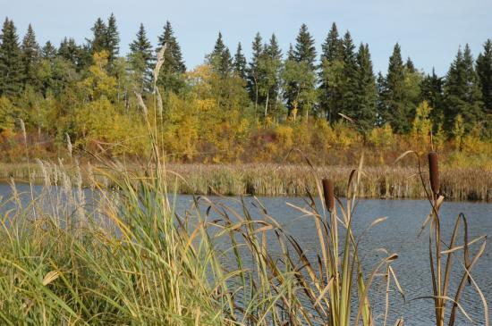 how to get to elk island national park