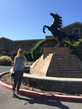Black Stallion Winery: Loved this place!