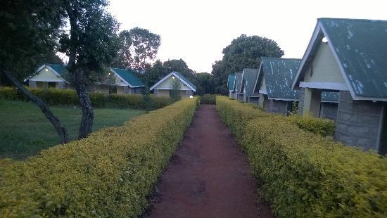 Rhino Tourist Camp: Walk way with landscaped garden
