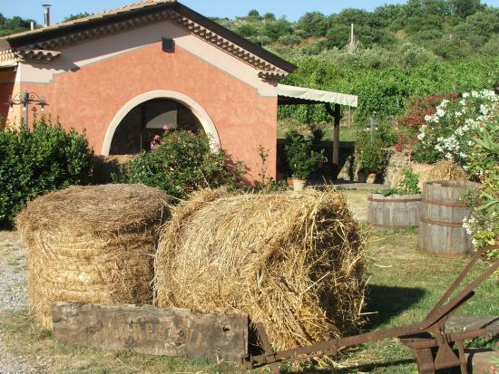 Agriturismo I Moresani: Agriturismo biologico nel Parco del Cilento