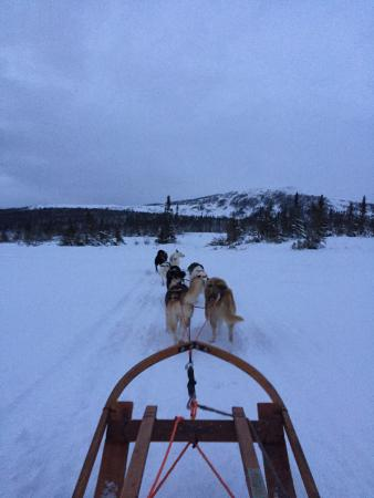 Undersaker, Sweden: Polardog Mountain Lodge -  Tours