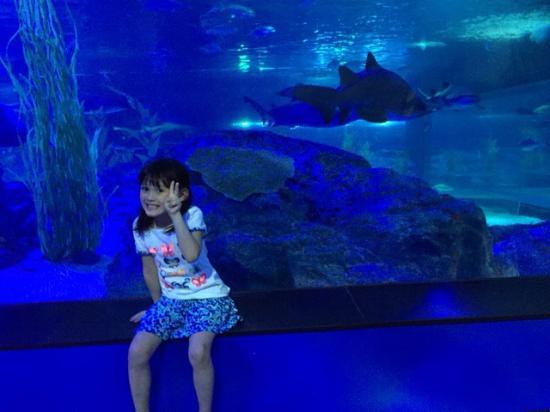 Requin - Picture of SEA LIFE Busan Aquarium, Busan - TripAdvisor