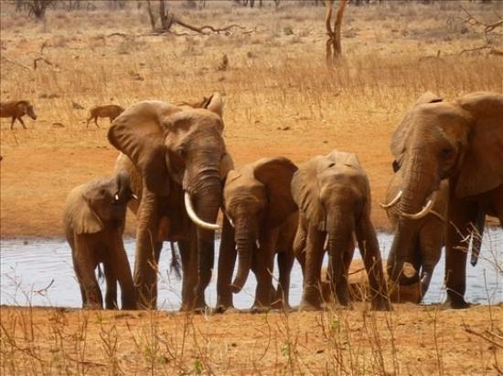 Wildlife Safari Exploreans Day Trips: Elephants