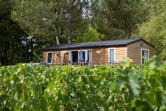 Camping Le Pressoir : mobilhome confort au coeur du vignoble