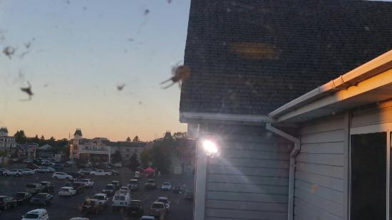 Ramada Mackinaw City Waterfront: Say spiders in every window and all over our balcony