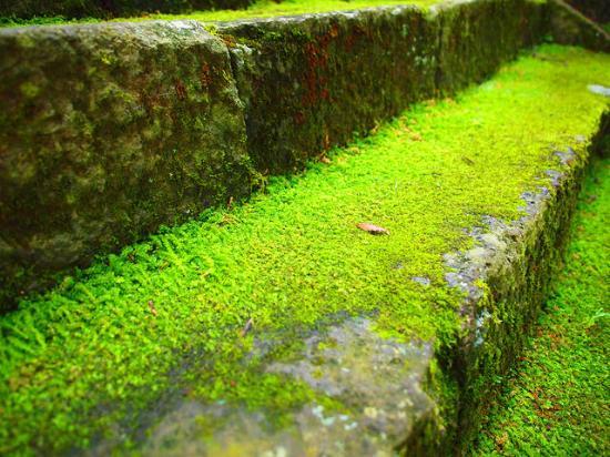 Jiunji Temple: 階段の苔