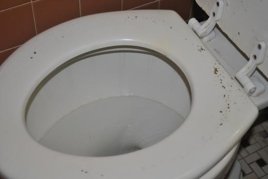 Toilet seat is all cracking. Notice that nice ring. It hasn\'t been ...