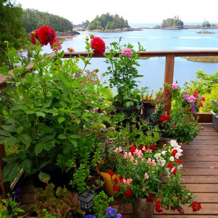 Horizons Bed And Breakfast Ucluelet