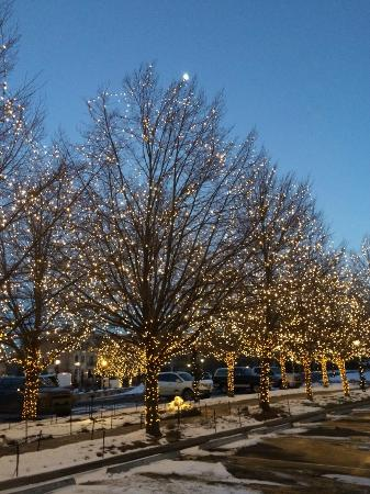 Colorado Springs Christmas.Christmas Lights On Trees Out Front Of Broadmoor Picture