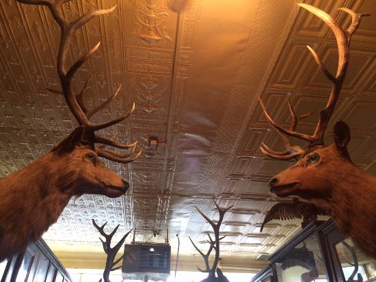 Columbus, MT: Horns and more Horns