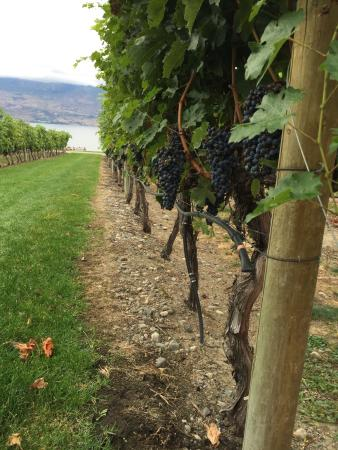 West Kelowna, Kanada: Just finishing harvesting