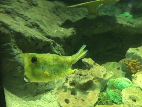 atrac?es - Foto di National Sea Life Centre, Bray - TripAdvisor