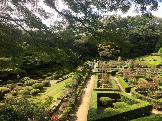 洋式庭園と洋館:松が日本を表明? - 北区、旧古河庭園の写真 - トリップアドバイザー