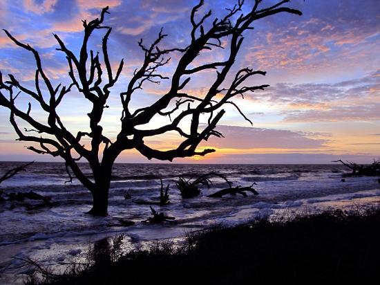 Driftwood Beach Jekyll Island Ga By David Fisher
