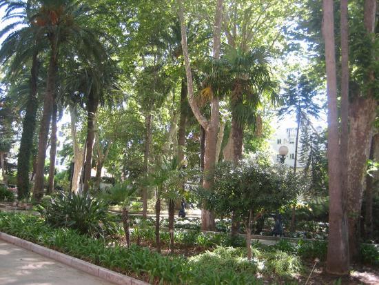 Parque Maria Cristina: деревья