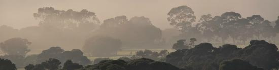 HideAway Haven: A misty morning - view from the deck