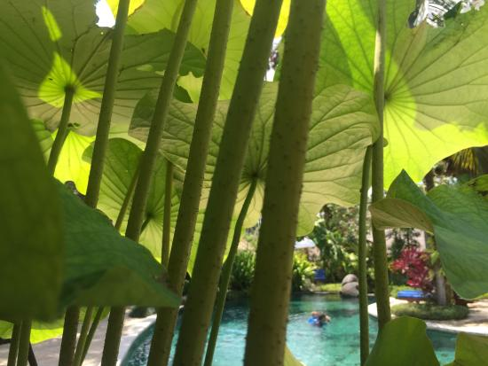 Samhita Garden: photo0.jpg