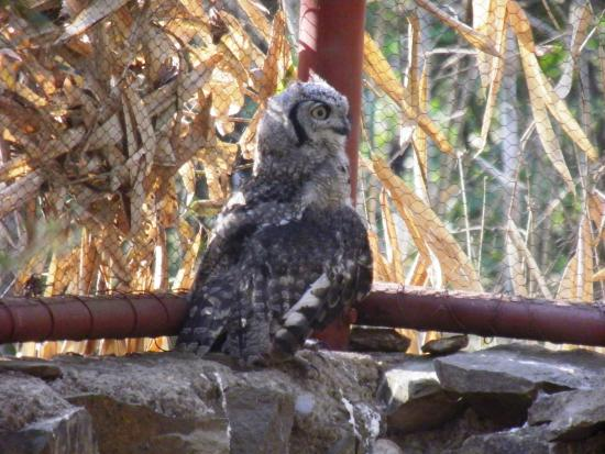 Owl at the Nature Sanctuary