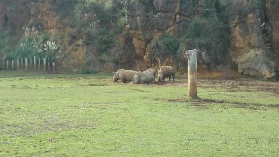 Parque de la Naturaleza de Cabárceno - Foto di Cabarceno Nature Park, Obregon...