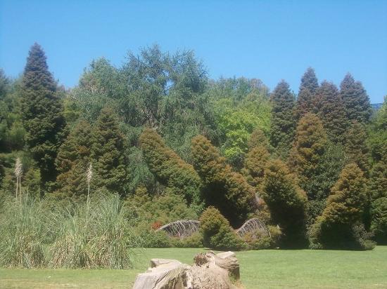 El jard n bot nico de la universidad austral de chile for Jardin botanico el ejido