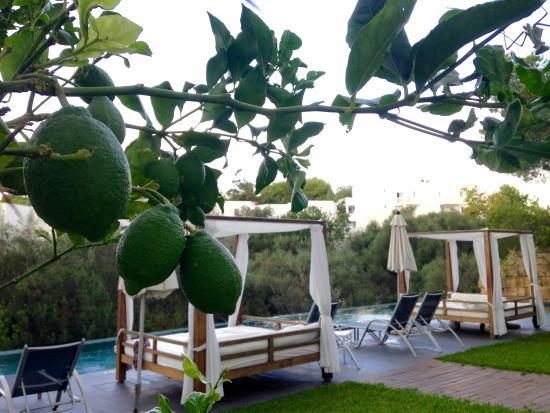 Ferrera Beach Apartments: The adults' pool area, complete with lime trees!