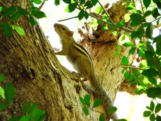 Kumbura Eco Lodge : écureuil emblématique