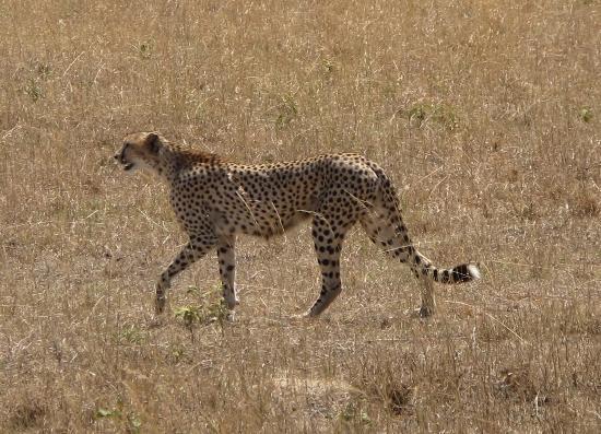 Rockland Kenya Safaris