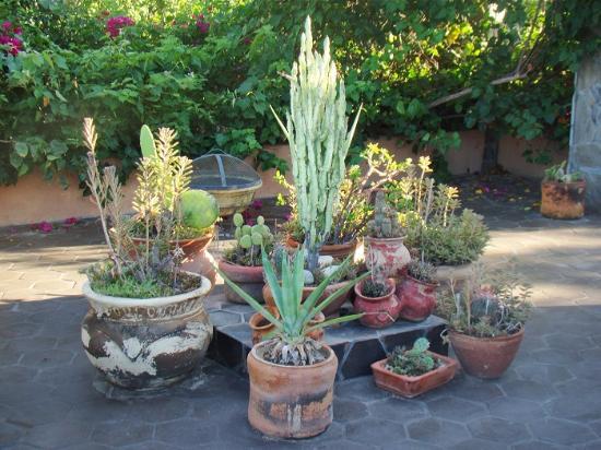 #El Nido at Hacienda Escondida: Terracotta pottery with native plants