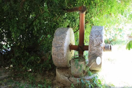 Markos' Place: Olive Press From Their Original Family Home