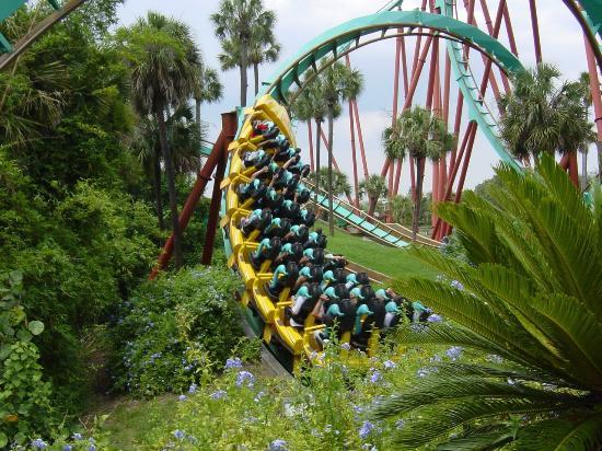 Busch Tuinen - Picture of Busch Gardens, Tampa - TripAdvisor