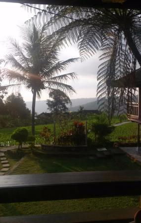 Puri Lumbung Cottages : view from cottage