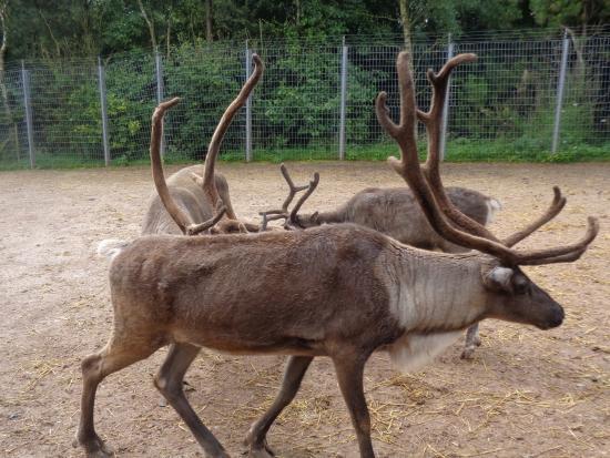 Dalton-in-Furness, UK: animals x