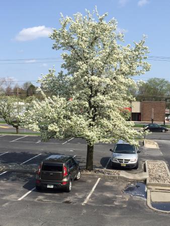 Days Inn Vineland: Parking Lot