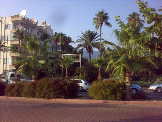 Merhaba Hotel: Вид с набережной на зелень отеля. Справа - не Мерхаба, а другой отель.