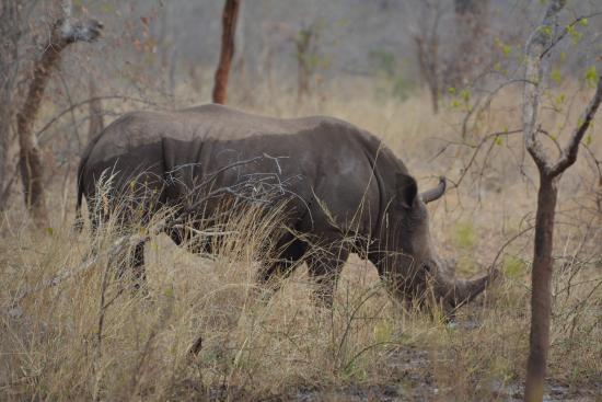 Kubu Cabins : Rhino walk