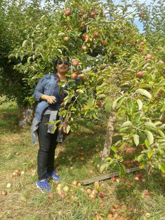 Yorktown Heights, Nowy Jork: Wilkens Farm