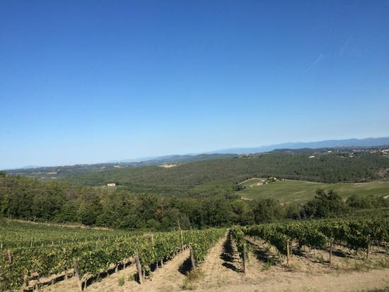 Vinarium: Tuscan vineyards