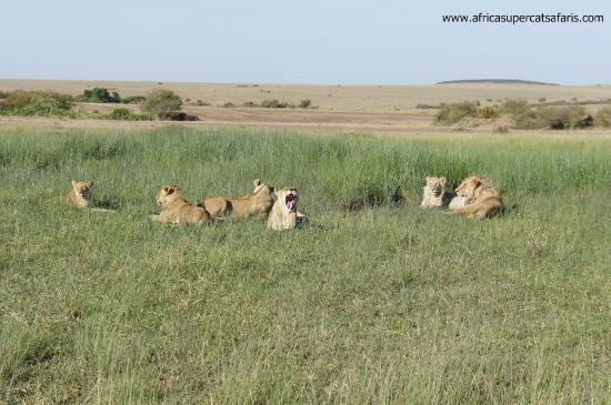 Super Cats Tours and Travel - Private Day Tours : Masai mara Kenya