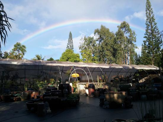 Kilauea, Hawái: Rainbow above Garden Ponds
