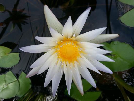 Garden Ponds Kauai