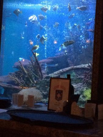 The Spectacular Aquarium Behind The Bar Picture Of