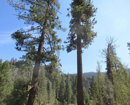 Columns of he Giants, Pinecrest, Ca