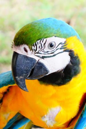 Tariri Amazon Lodge: Ara