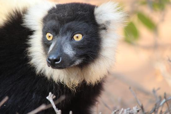 Lemurs Park : Vari